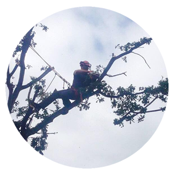 Tree Care in Hampshire